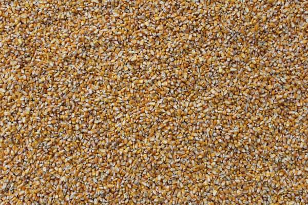 玉米1.jpg